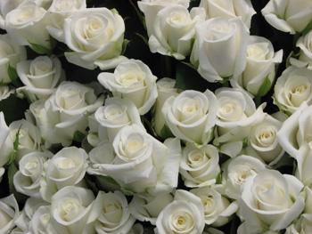 flowers photo 3