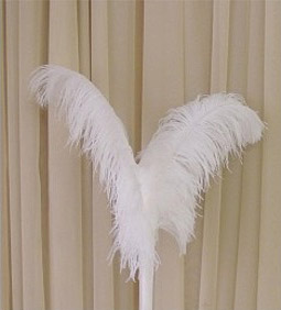 Single White or Black Ostrich Feathers